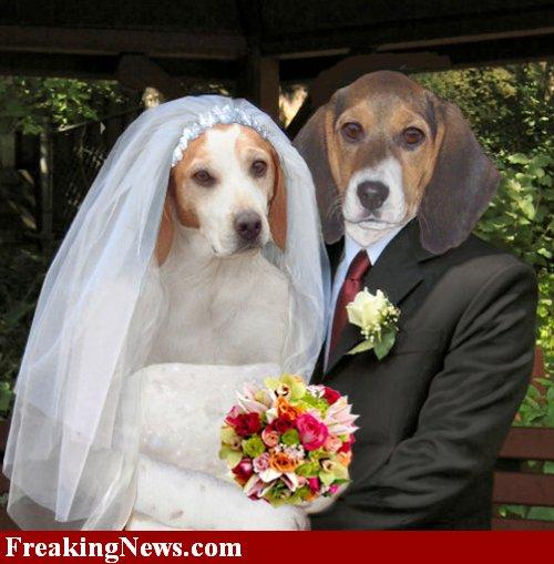 Dog Friendly Weddings Northeast