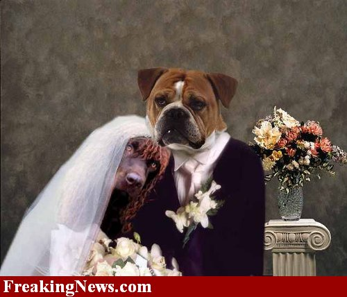 dog-wedding-23143.jpg