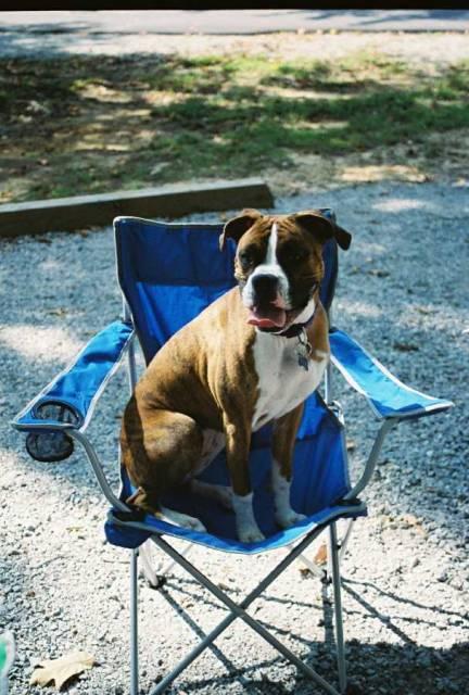 Dog Friendly Camping South Australia