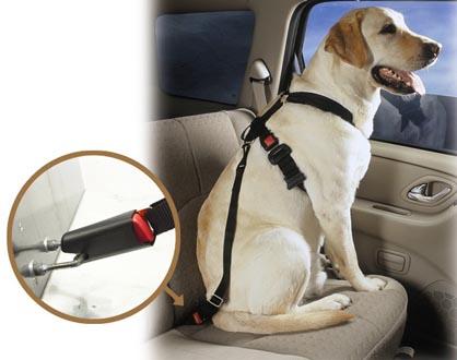 Dog Travel Safety Uk