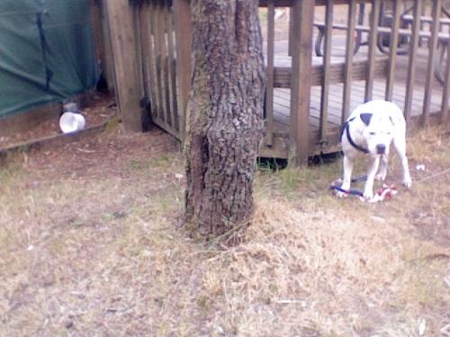 Dog Friendly Camping Mackay