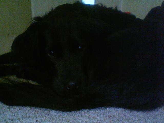 Dog Friendly Florence Oregon