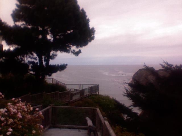 Four Paws Inn Newport Beach Cafree Yoga Newport Beach