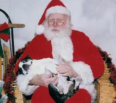 santa-dog1