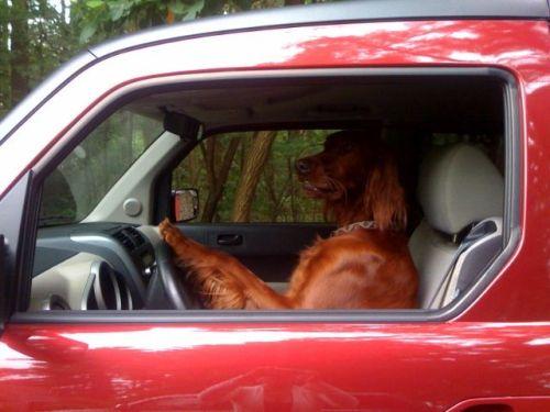beau-driving1