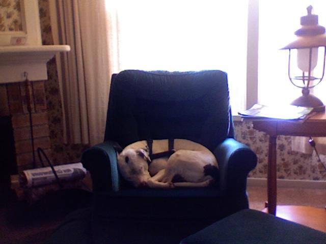 Dog Friendly Workplaces Salt Lake City