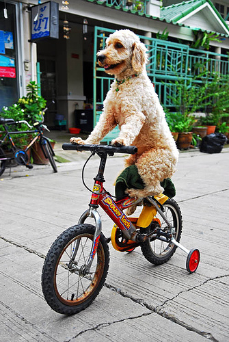 Biking With Your Dog Have Dog Blog Will Travel