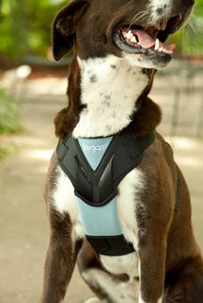 Car Dog Harness Pets At Home