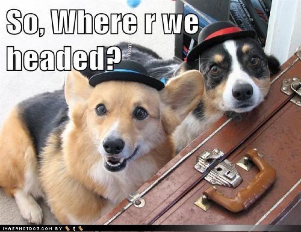 Dog Friendly Travel Destinations