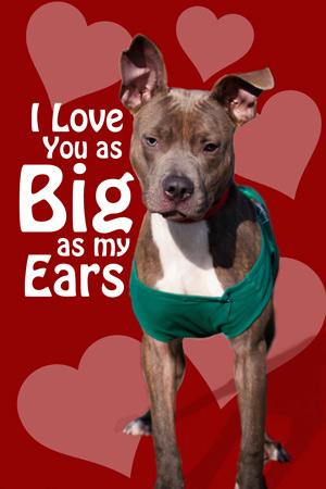 Personalized Dog Collars Toronto