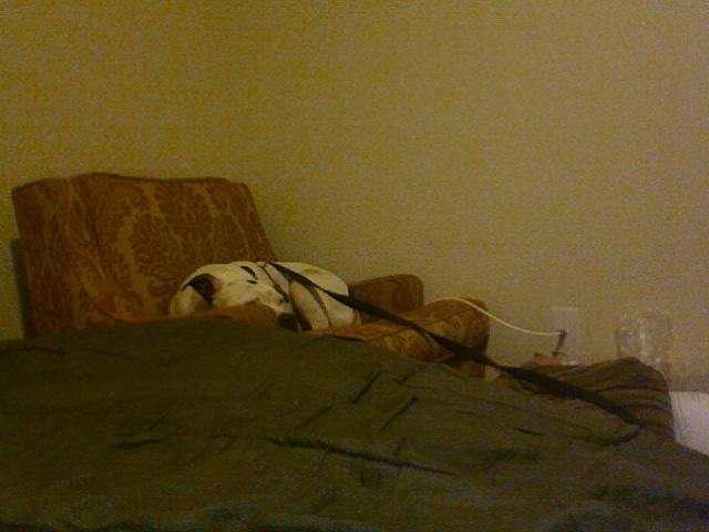 Dog Pillow Beds Amazon
