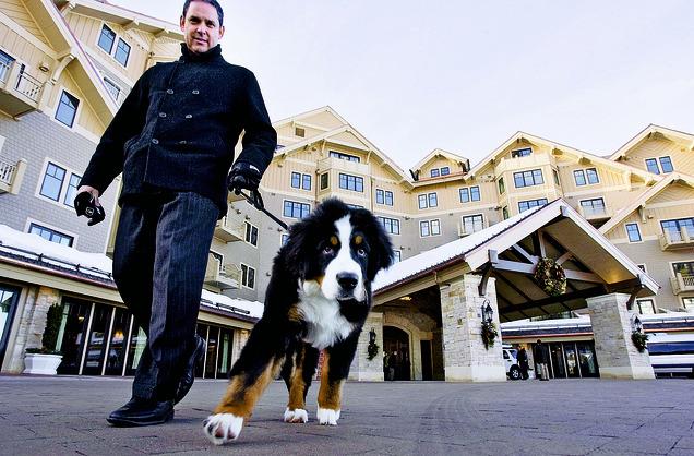 Pet Hotel Reno