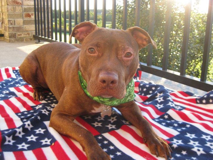 Dog Rescue Cordinator Wage