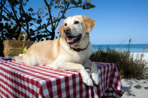 Dog Friendly Beaches Qualicum