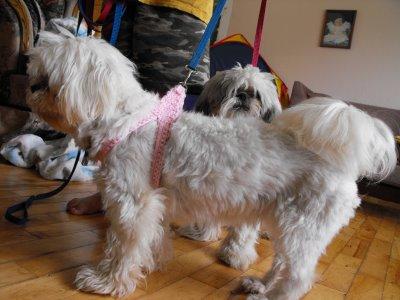 Http Poshpoochdesignsdogclothes Blogspot Com P Free Patterns For Dogs Html