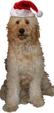 Affordable Dog Dental Care In Kingston Ontario
