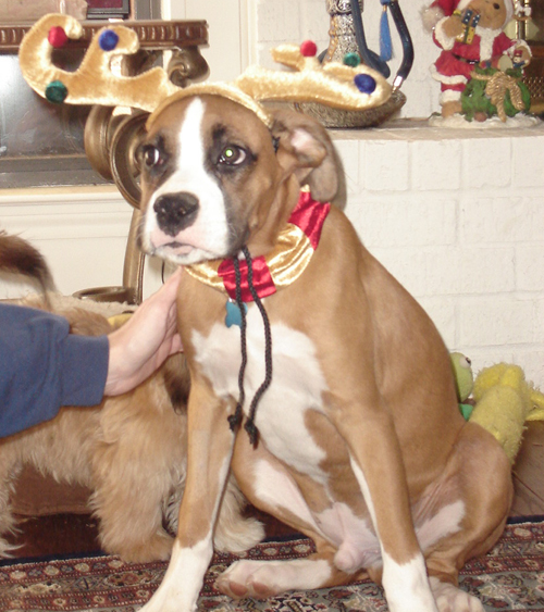 Holistic Dog Treats