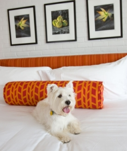 Dog Friendly Inns And Hotels Is Somerset And Wiltshire