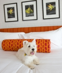 Dog Friendly Inns Near Dedham Suffolk