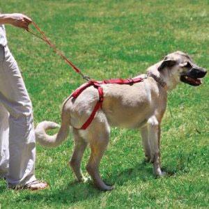 Adjustable Pet Steps Espresso White Cat Dog Bed Car Step