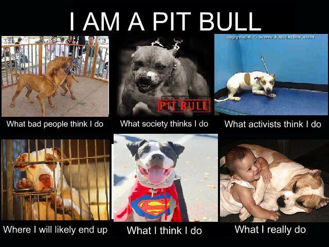 %name Nanny Dog Pitbull History