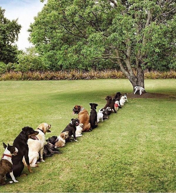 Pet Dog Toilet