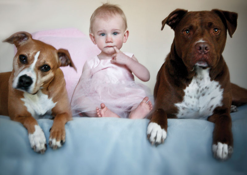 Restricted Dog Breeds For Spice Tree Apartments