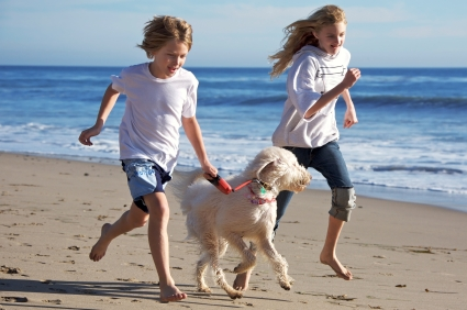 Dog Friendly Motels In Wildwood Crest Nj