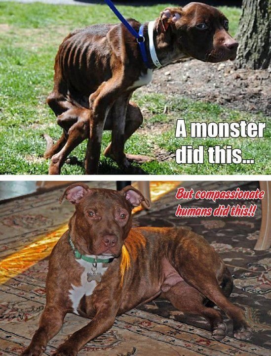 patrick before and after1 Pitbull Dog Love Quotes