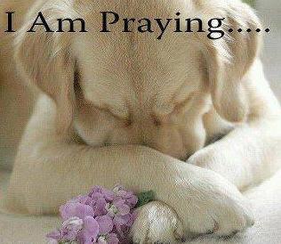Image result for sending prayers to a dog pics