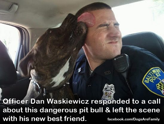 Pit bulls were the dog of choice for famous personages such as ...