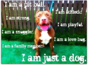 Image Result For Can Pitbulls Work