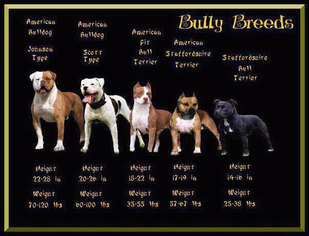 Top Dog Breeds For Personal Protection