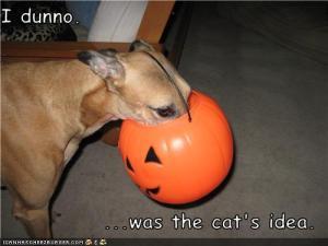 Image Result For Dog Canned Pumpkin