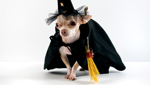 Homemade female dog costumes - photo#48
