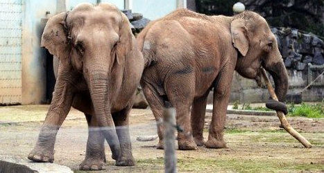 hollande-steps-in-to-save-bardots-elephants
