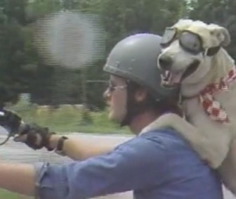 motorcycle-riding-dog