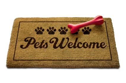 Pet Friendly Hotels Odeba Tx
