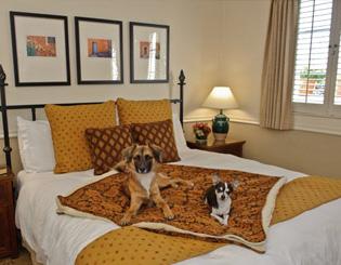 Maccallum House Dog Friendly