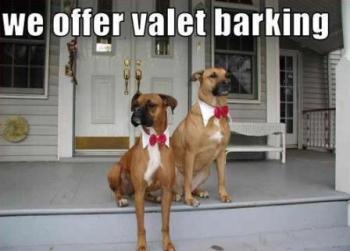 ValetBarking