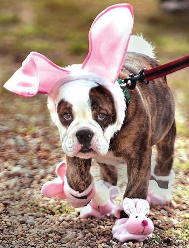 Dog Easter Treats Uk