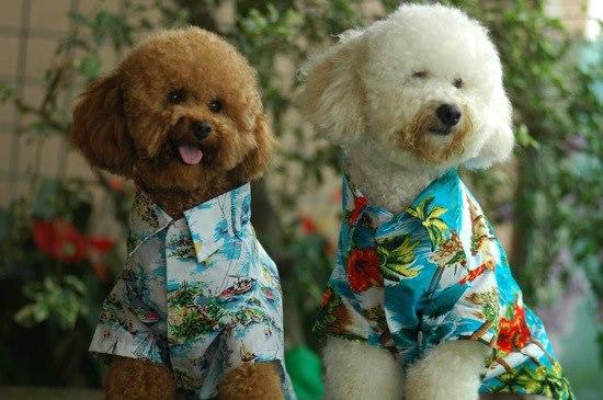 Dog Boarding Hawaii Kai