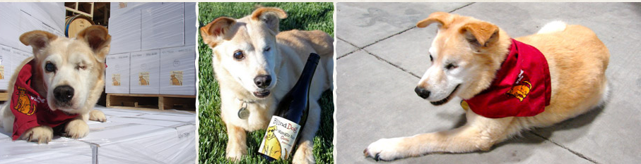 Paso Robles Pet Friendly Bed And Breakfast