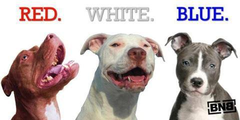 %name Game Dogs Pitbulls