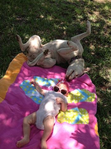 Orlando Sentinel Dogs For Sale