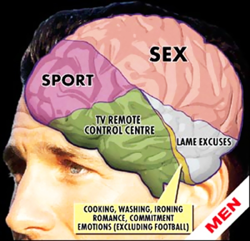 mens-brains