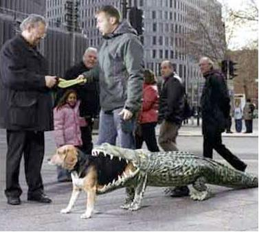 Alligator Dog Breed