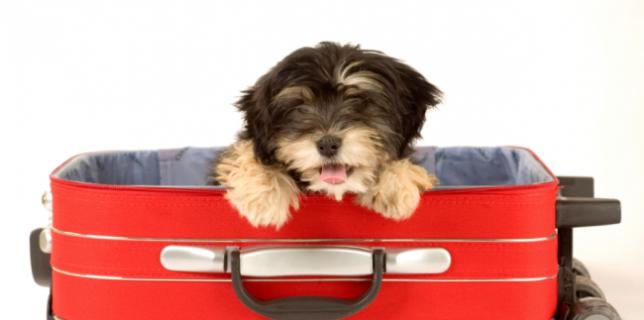 Pet Friendly Motel Canberra