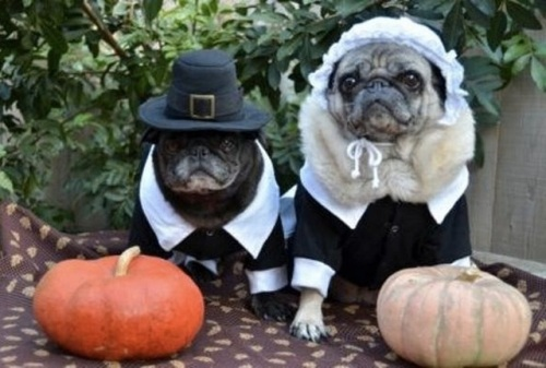 thanksgiving-dog-pilgrim-costume-4