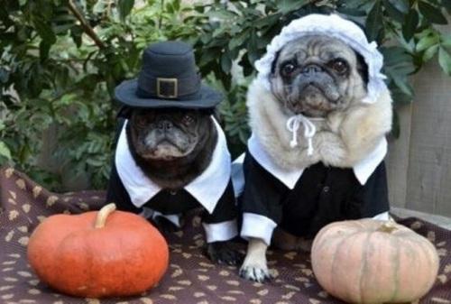 thanksgiving-dog-pilgrim-costume-4